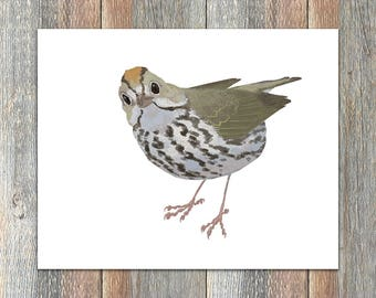 Ovenbird Bird Print