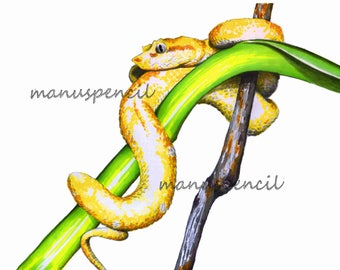 Snake of TROPICAL NATURE series