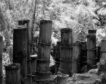 """Black and white photography """"bamboo"""" martinique, may 2015"""
