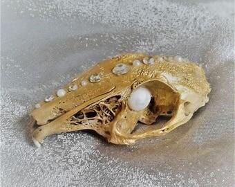 Gold Rat Skull