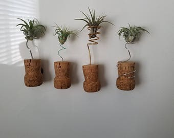 Champagne cork air plants with Magnetic back