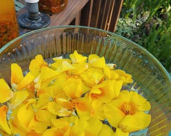 California Poppy Flower Essence
