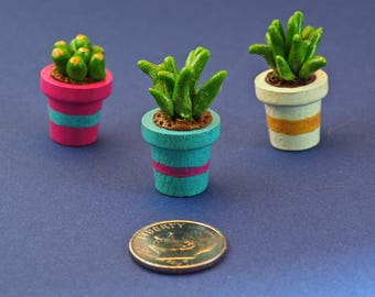 Miniature Potted Succulents 3pack