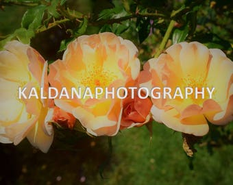 Beautiful Flowers Photography Wall Art