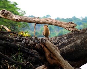 Mindful Monkey