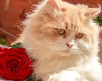 Placemat / blotting pad laminated beige and white Persian Cat Red Rose
