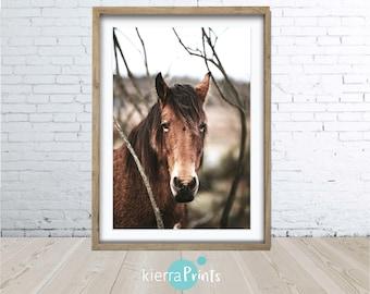 Brown Horse Print, Colour Photography, Horse Print, Wall Art, Wilderness Print, Equestrian Art, Printable Art, Home Decor