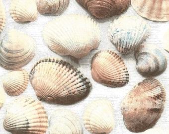 2 shells (313) paper napkins