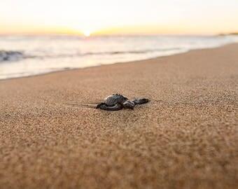 Baby Sea Turtle in Puerto Vallarta