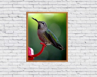 Photography digital image of a hummingbird artwork