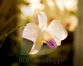 Sunset Orchid | Flower Photo Art | Nature Lover Gift | Fine Art Photography | Personalization | BDPhotoShoppe | Home Office Decor