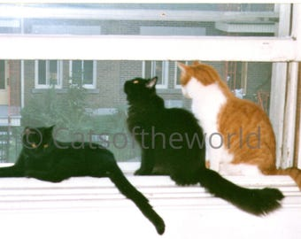 3 cats by the window photo jpg