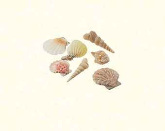 "Mixed Seashells - Various Sizes up to 2"" Shells - Approx. 50 Seashells"