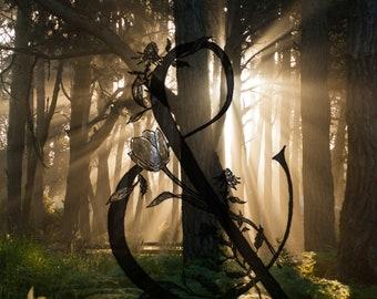 Beautiful digital image of forest, fog, Oregon Coast, Doran Beach Screensaver, Wallpaper