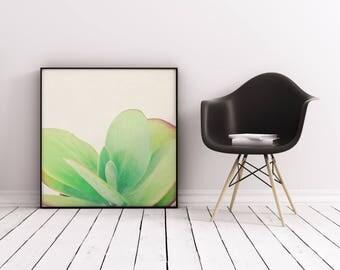 Leaf Print, Succulent Print, Botanical Art, Gift for Gardener, Minimal Kitchen Wall Decor - Paddle Plant