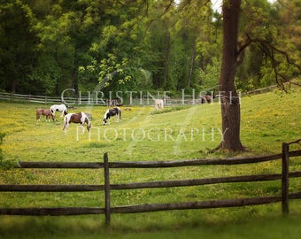 Horse Field Fence Digital Photography Backdrop Outdoor For Photoshop Composites