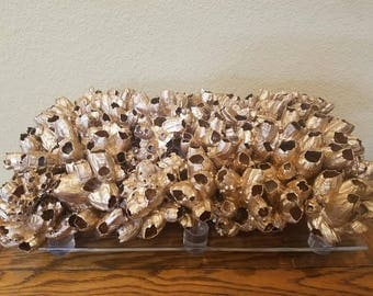 Natural Barnacle Cluster Clump Luxe Statement Size Sculpture for Display Art Sea Life Nautical Seashells Home Decor Coastal Living