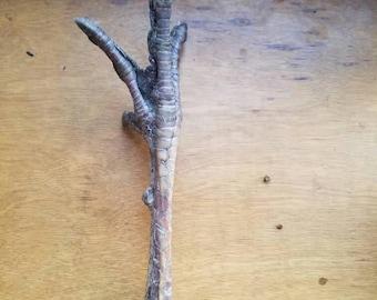 Turkey Foot - Naturally Dried - Curiosity Item or Talisman