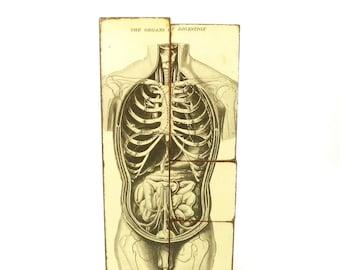 "Collage Art Blocks ""Gray's Anatomy"", Vintage Anatomy, Hand Made Collage"