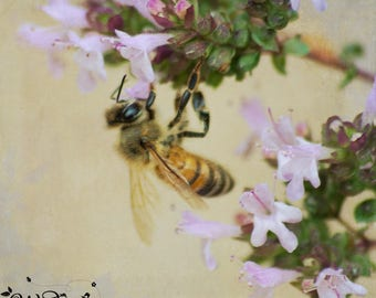 Bee photography,honeybee photo,insect photograph,macro photography,bee print,flower photo,bee art,nature photography,bee close-up photo