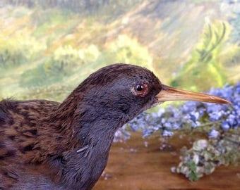 ON SALE Vintage Taxidermy Bird
