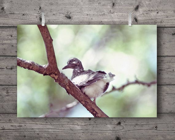 Baby Mourning Dove / Bird Perched On Tree Branch / Wildlife Woodland Nature Photography Print / Outdoors Home Decor / Soft Pastels Wall Art