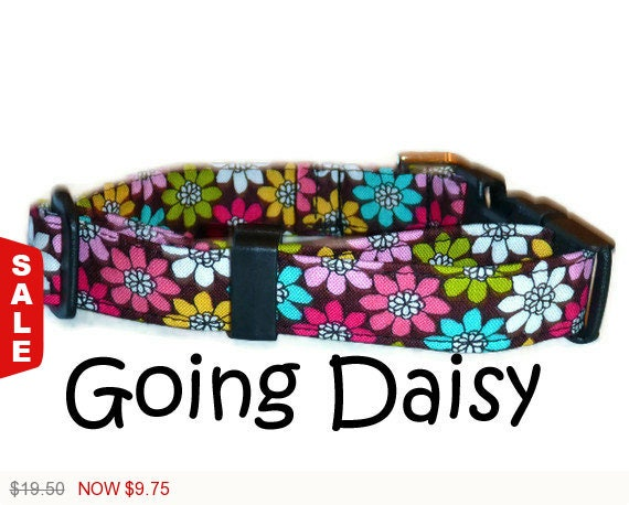 "Sale - 50% Off - Floral Dog Collar Multi Colored Daisies - ""Going Daisy"" - Free Colored Buckles"