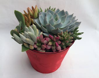 Large Succulent Arrangement in a Red Heart Designed Fabric Covered Planter. Beautiful and elegant, completely assembled dish garden.
