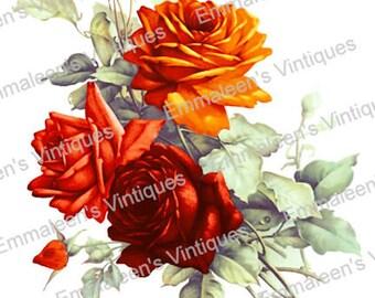 Vintage Victorian Shabby Orange Tea Roses Waterslide Decals FL499 U PIC SIZE