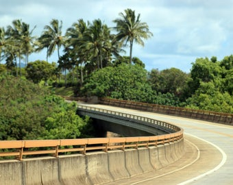 Palm Tree Bridge- Hawaiian Photography- Winding Road- Kauai County