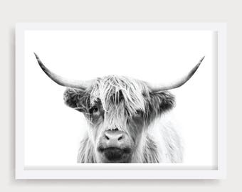 Highland Cow Wall Art, Black and White Cow Print, Cattle Photography, Cow Prints, Cow Printable, Animal Portrait, Printable Cow, Bull Prints