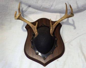 Deer Antlers and Mounted Deer Skull, Great Vintage Decor or Repurpose as Jewelry Display