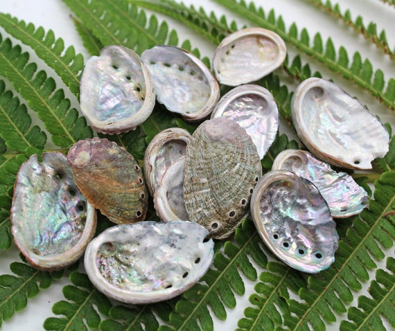 Small 751 abalone shells crafts or jewelry for Tiny shells for crafts