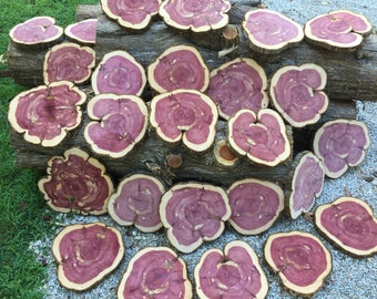 Red Cedar Large, Mill Cut Smooth Tabletop, Wedding Decoration- Aromatic Natural Bark Edge Tree Sections- (each)- J&R