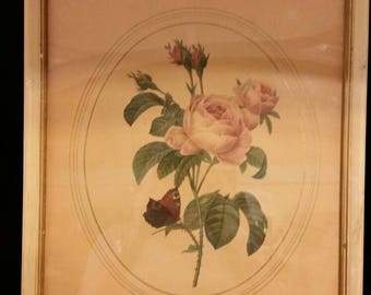 Pair of vintage rose prints