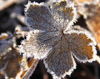 Sunlit frozen leaf
