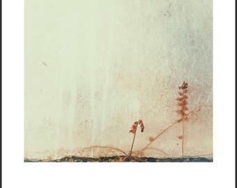 Wallflowers - 'Side by side'