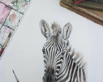 Zebra - Original
