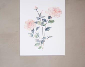 """Rose Watercolor Artprint 8""""x10"""""""
