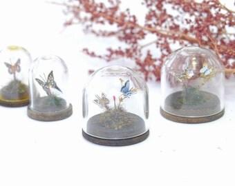Butterflies under Glass Dome - 1/12th dollshouse miniature