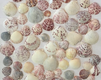 Castaways and Barnacle Bill - No luster and not specimen shells - Sanibel Island. Over 65 Imperfect Second Quality Seashells for decorating.