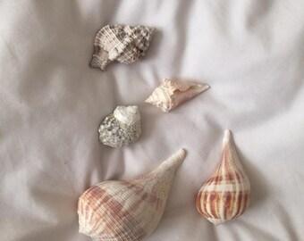 Real Shells - Set of 5