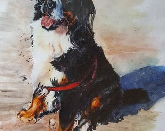Custom Bernese Mountain Dog Watercolour Portrait. Pet Portrait Painting.