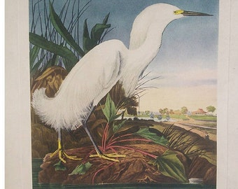 Audubon's Snow Heron or White Egret by American Print Craft Gulid
