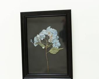 Pressed Flower, Dried Hydrangea, Black Frame