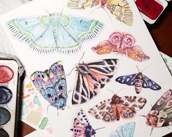 Bright, Colourful Moths | Fine Art Print