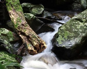 Creek Water Long Exposure in Rainforest | Australian Nature Landscape Photography Print | Wall Art Decor | 5x7, 6x8, 8x12, 11x14, 12x16