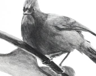 PERCHED BUT READY - Original Artwork, Stellar Jay, Birds, One of a Kind, Bird Art