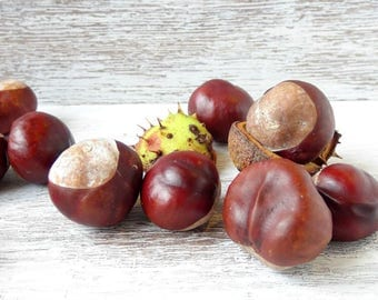500g( ~ 50 pieces) Horse Chestnuts,Dried Horse Chestnuts,DIY,Vase Fillers,Home Decor,Autumn Decor,medicinal decoration,dried chestnuts