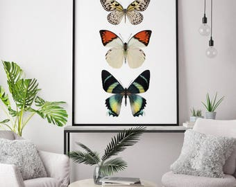 Butterfly Print, Butterflies Art Print, Butterfly Photography, Nature Photography, Nature Wall Art, Insect Art, Butterfly Wall Art